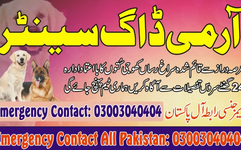 Army Dog Center Emergency Contact 03003040404 Trusted