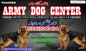 Kasur Dog Center