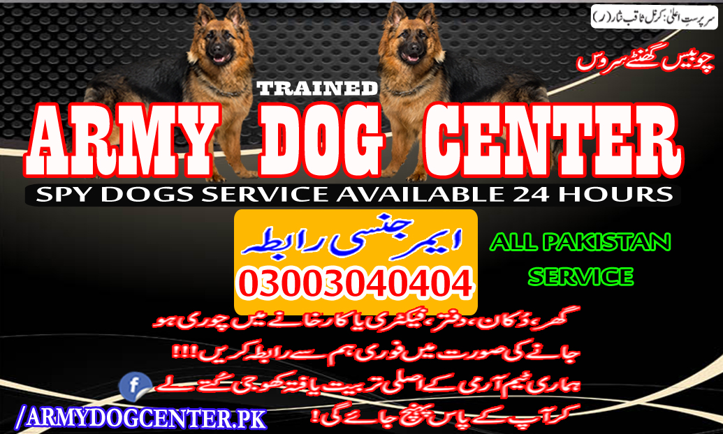 Army Dog Center Real Army Trained Dogs 03003040404