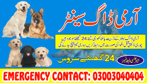 Crime Detective Dog Center 03003040404 All Pakistan Service