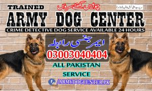 Peshawar Dog Center