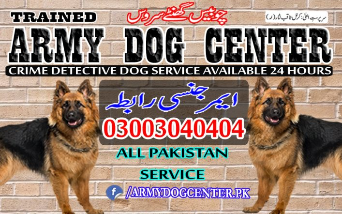 Peshawar Dog Center All Pakistan Service Emergency Call 03003040404